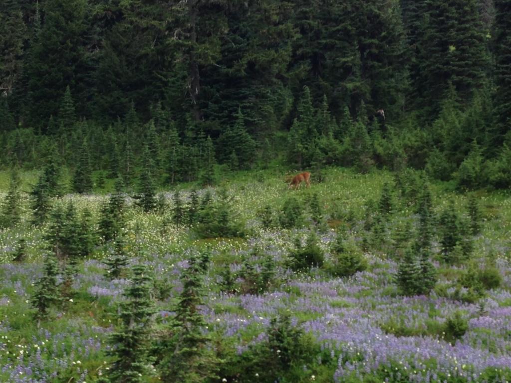 Wildlife among the wildflowers.
